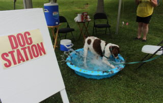 A dog enjoying the doggie pool on a hot day at the cape may mac Hops Festival