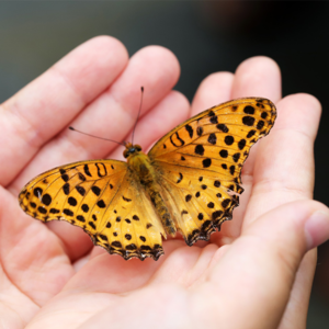 Childs hand holding a butterfly