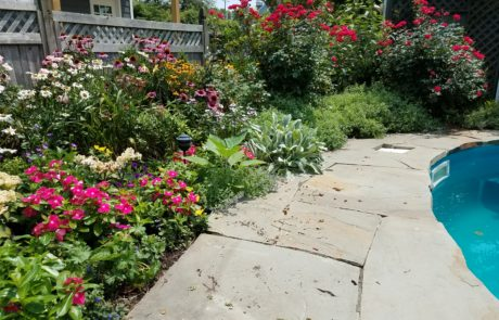 Private Home garden in cape may new jersey